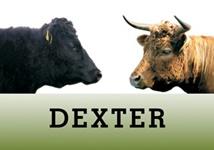 Dexter Verband Deutschland