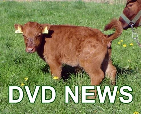 DVD News